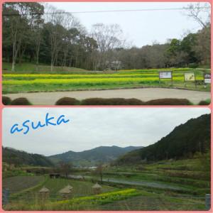 20130329asuka